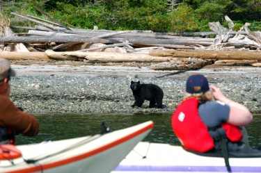 bear-and-kayaks-johnstone-strait