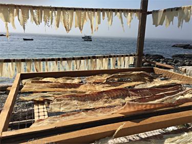 halibut dry