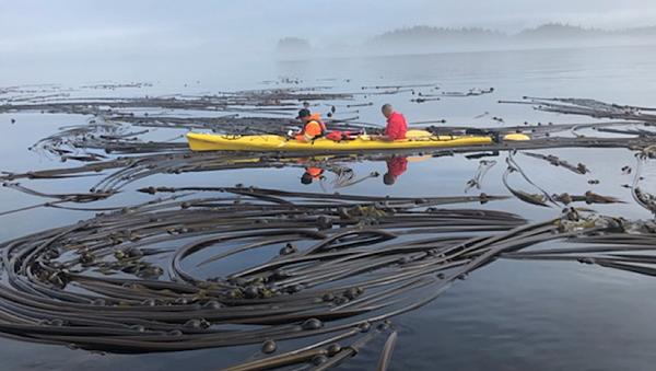 Kayak-kelp