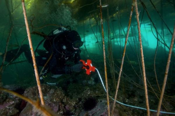 Underwater-kelp