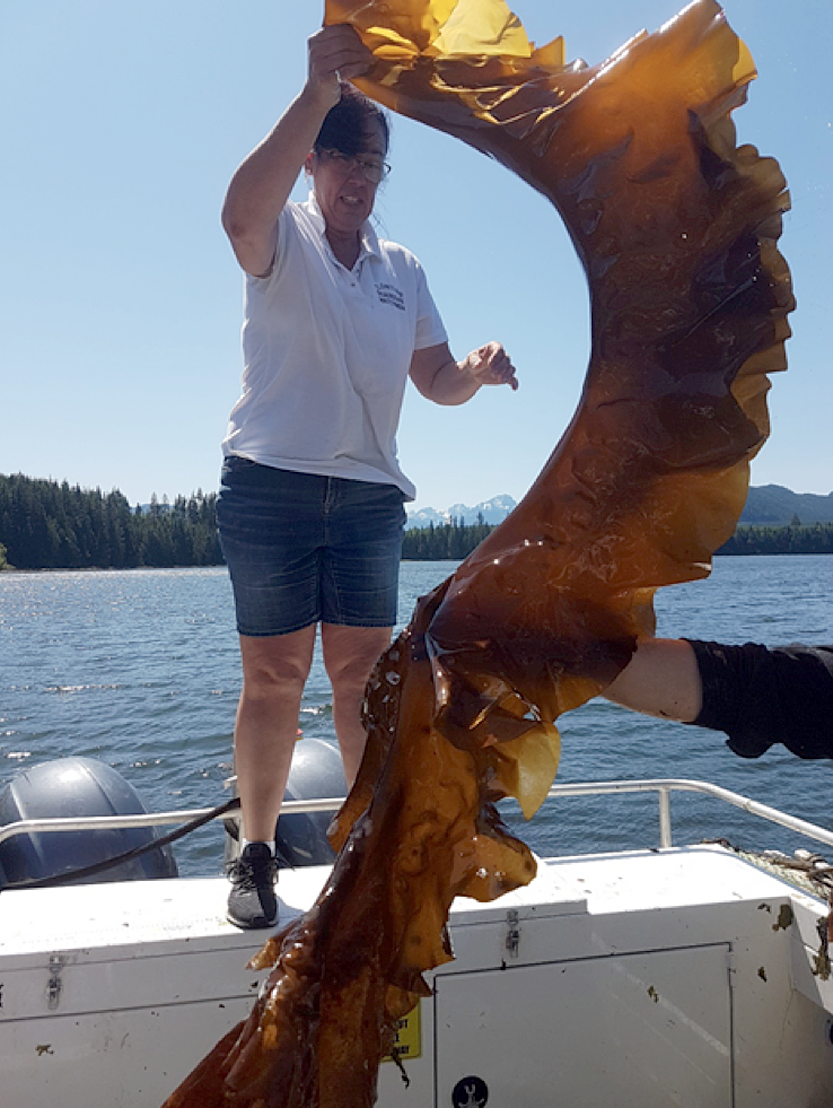 Tlowitsis Guardian Gina Thomas holds up one of the largest kelp fronds grown during MaPP's kelp aquaculture pilot, in Port Neville, B.C., on May 27, 2019; it measured 2.5 metres long. Photo credit: Allison Byrne